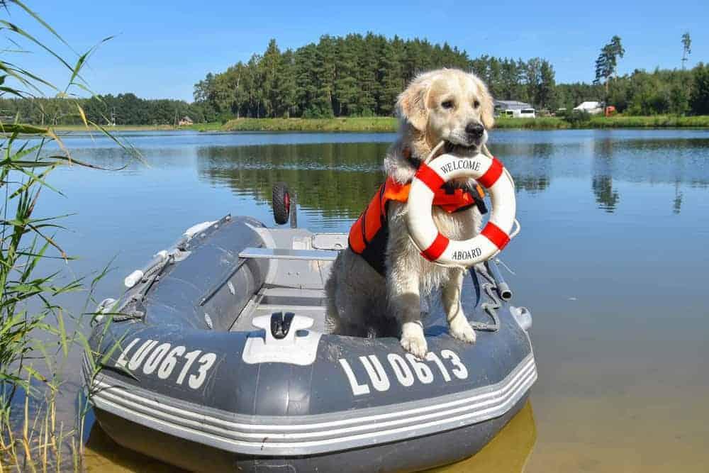 Do Golden Retrievers Make Good Guard Dogs
