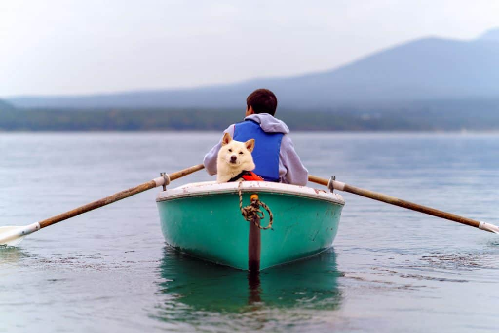 Do Dogs Have To Wear Life Jackets? [Ultimate Guide] | Retriever Pets