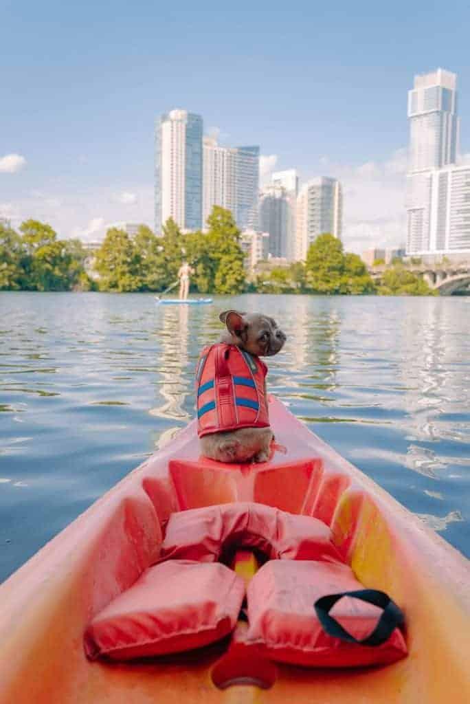 do dogs need life jacket on boat