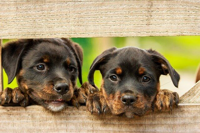 can rottweilers and cats get along